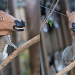 Horse head squirrel feeder on a branch